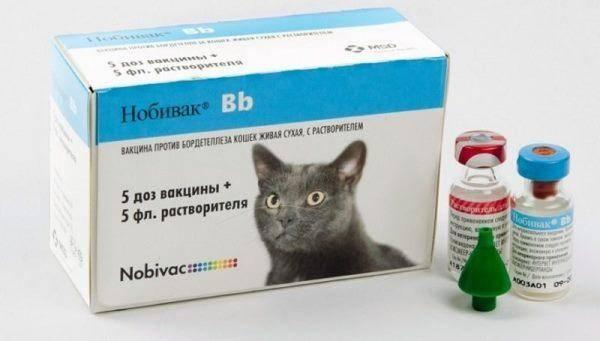 Какие прививки делают котятам и в каком возрасте