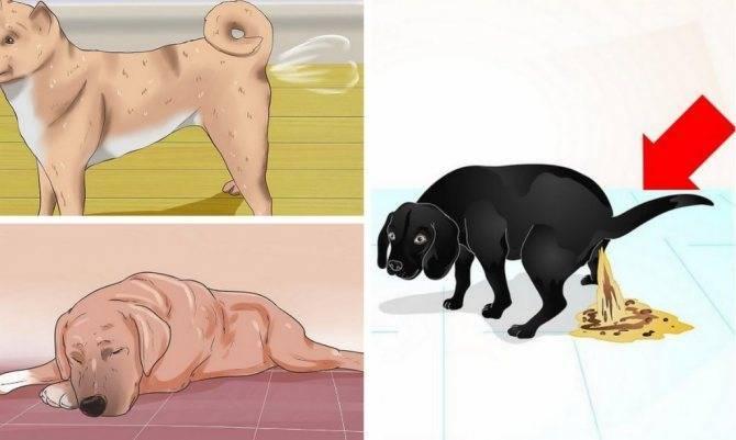 Черный кал у котов. запор у кошки или изменение цвета кала