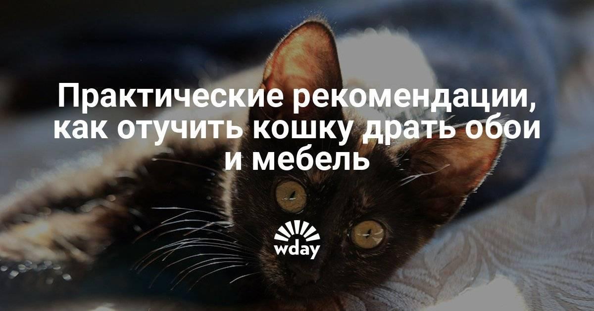Кот дерет обои что делать? 5 причин зачем он это делает