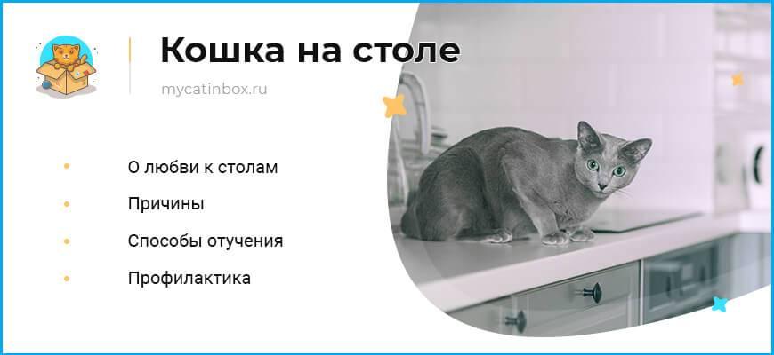 Почему котенок или взрослая кошка писает на хозяйскую кровать, что делать?