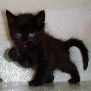 Клички для кошек девочек: прикольные и красивые