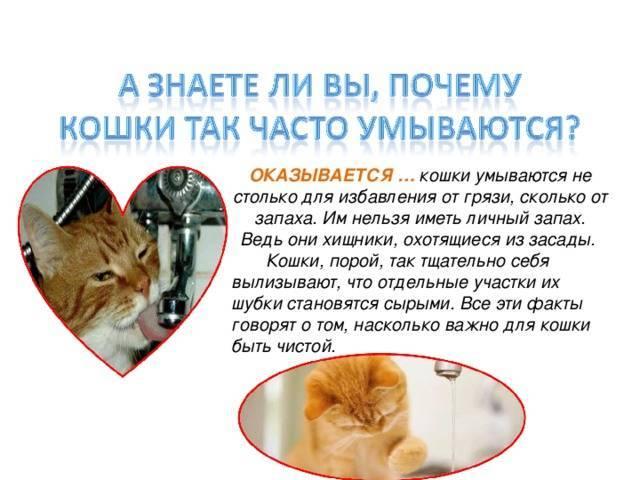 Почему кошка лижет человека