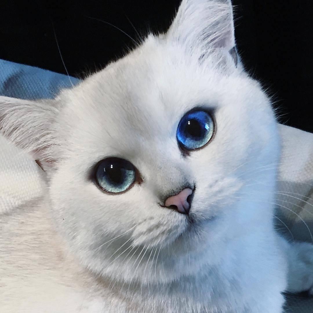 Кошки с большими глазами