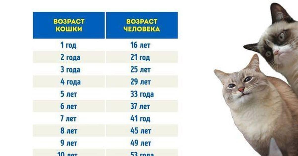 Когда кошка начинает гулять после родов: мнение ветеринаров и заводчиков