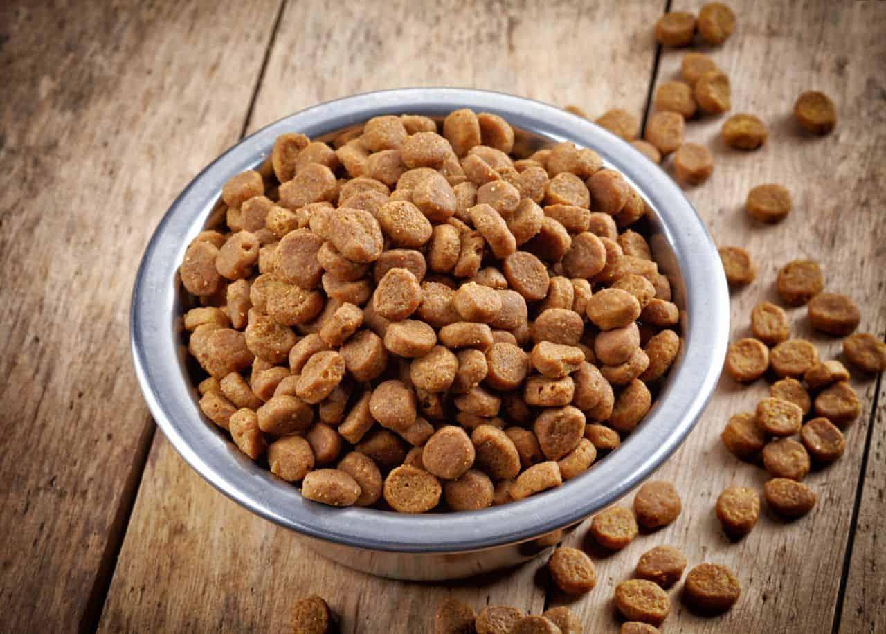 Можно ли размачивать сухой корм для кошек?