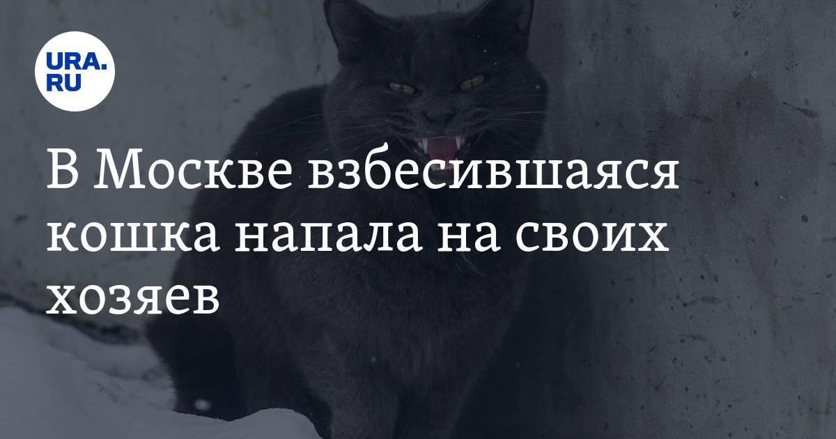 Как отучить кота шкодить и портить вещи
