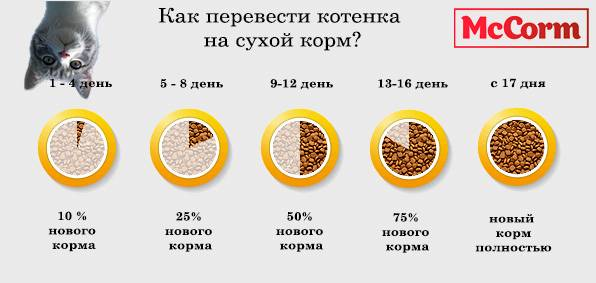 Как приучить взрослую кошку к сухому корму: после влажного или натурального типа питания