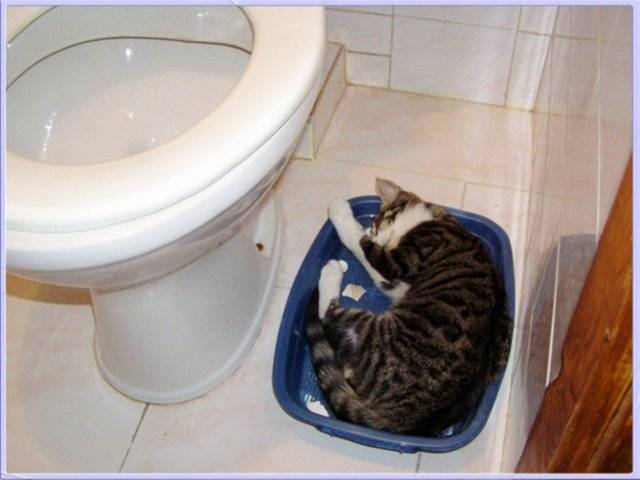 Кошка после переезда не ходит в туалет и не ест: что делать, советы
