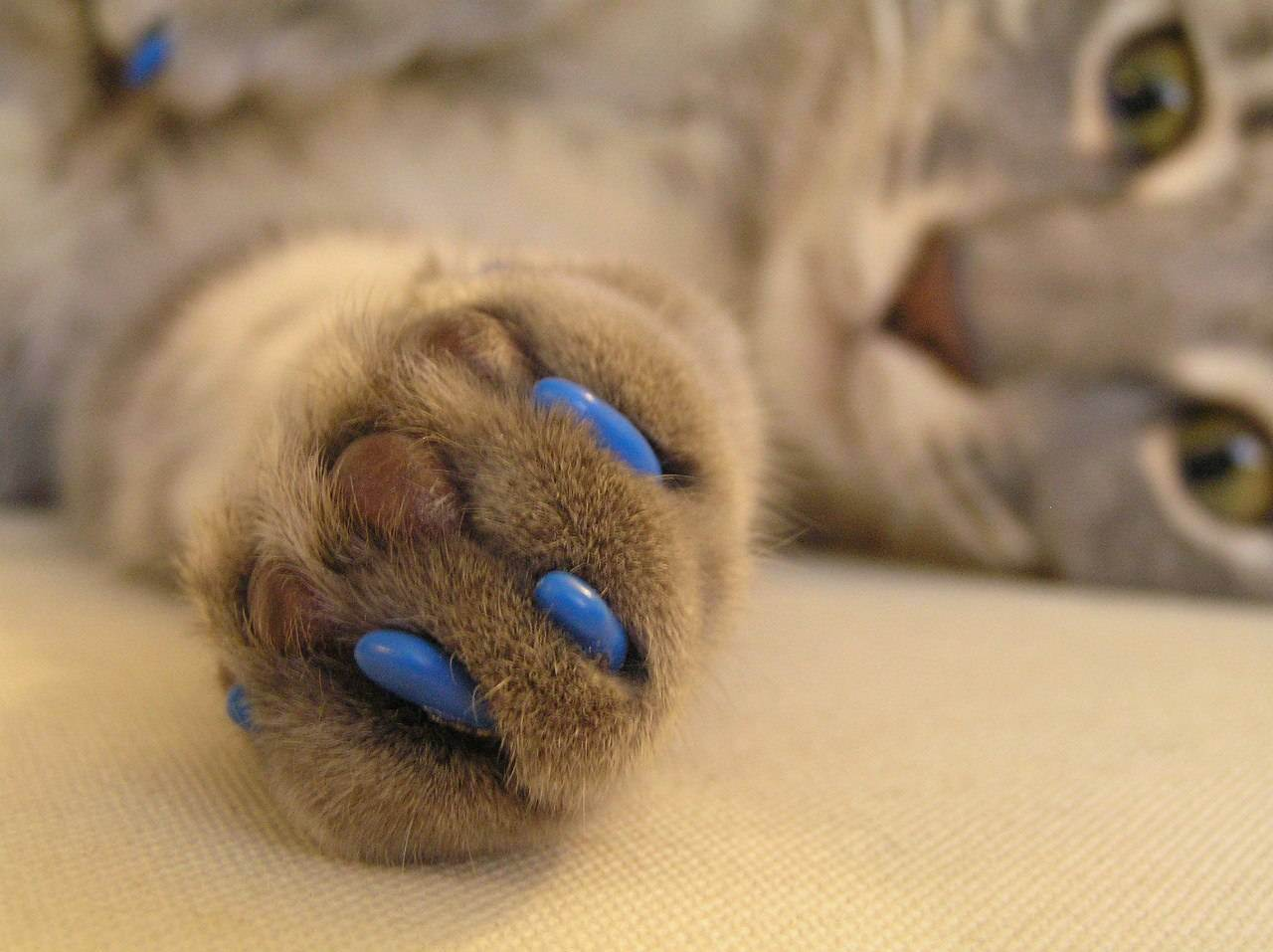 Как делают операцию «мягкие лапки» у кошек: плюсы и минусы процедуры