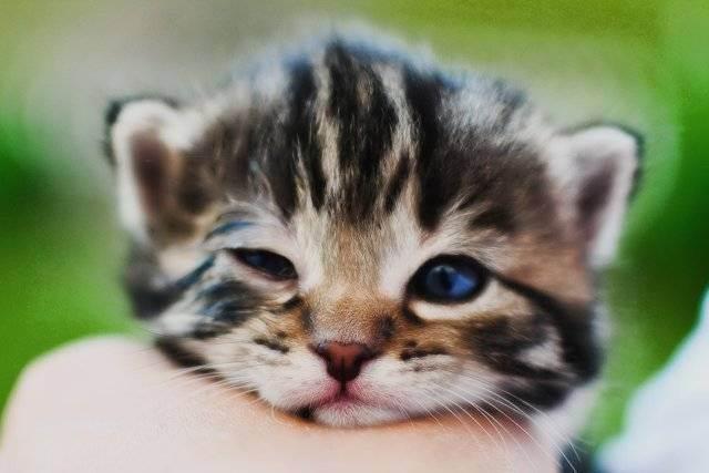 Пять принципов комфортной жизни кошки в квартире | лолкот.ру