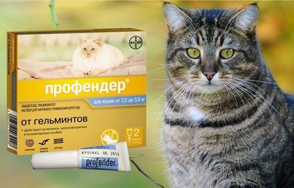 Профендер для кошек: инструкция по применению | отзывы, цена