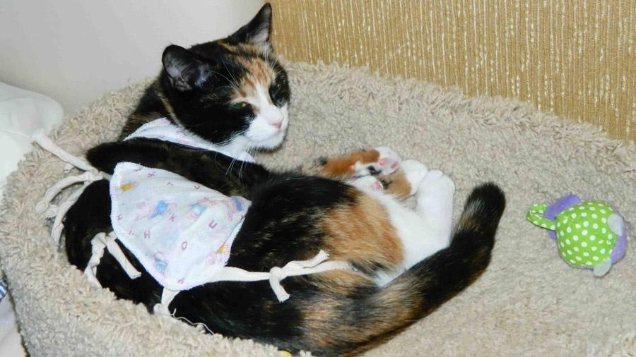 До какого возраста может рожать кошка