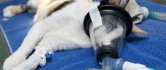 Кот икает: почему это происходит и как избавиться от икоты