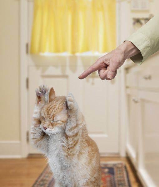 Как правильно наказать кота – приучаем пушистого проказника к дисциплине
