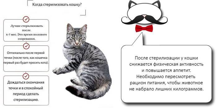 Химическая стерилизация кошек: плюсы и минусы метода