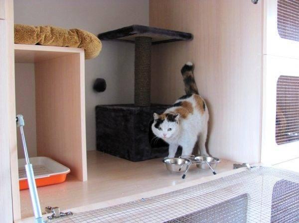 «иногда заявок в 25 раз больше, чем мест». как зарабатывает отель для котиков