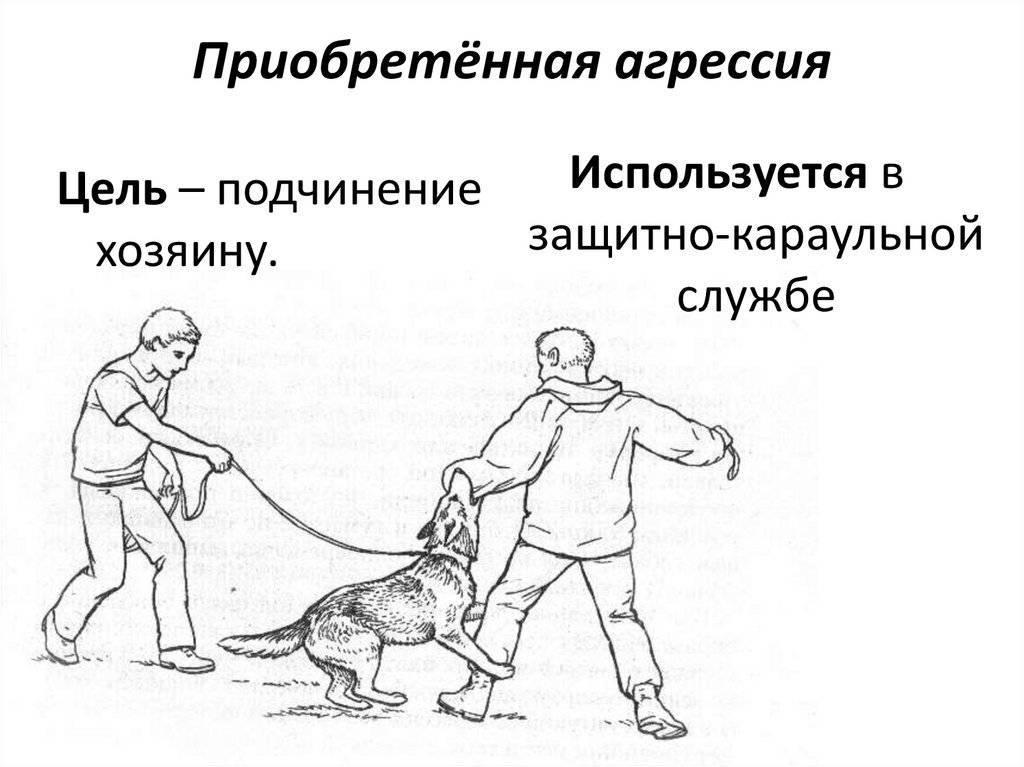 Что делать если кот постоянно нападает, кусается и царапается?