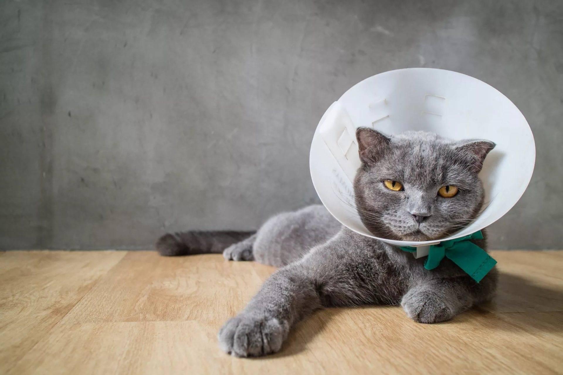 Почему у кошки дергается голова?