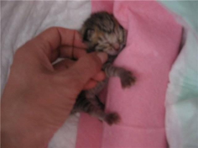 Методы реанимации новорожденных котят.