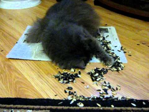 Почему кошка ест землю: нарушение психики или нехватка витаминов