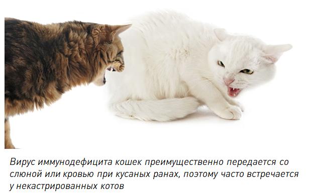 Болезни кошек симптомы и лечение, признаки заболеваний