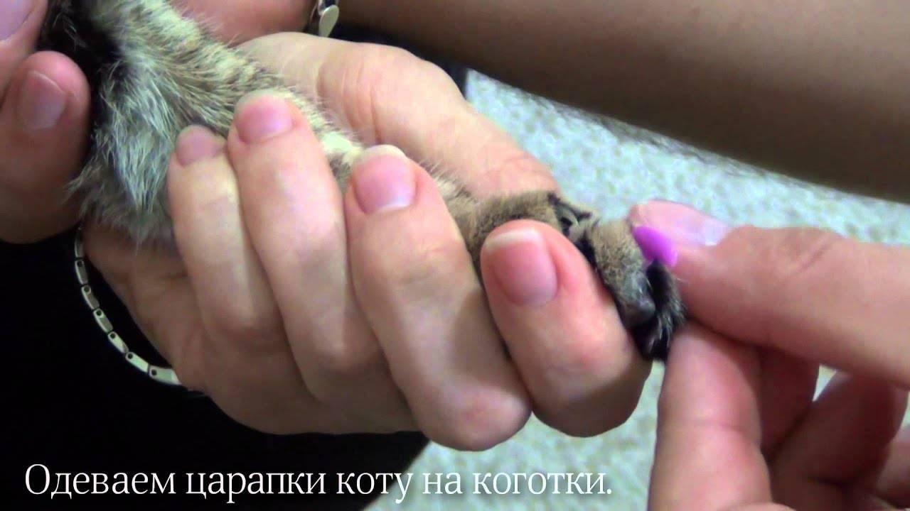 Как выбрать и надеть антицарапки для кошек
