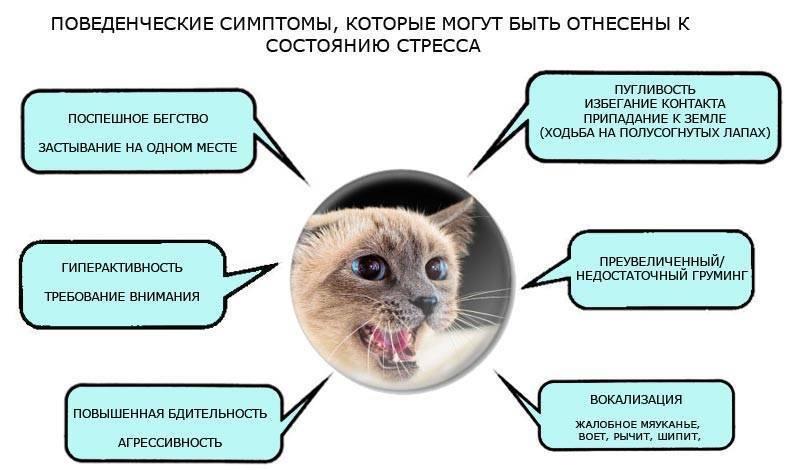 Почему кошка смотрит в пустоту: научное объяснение и мифы