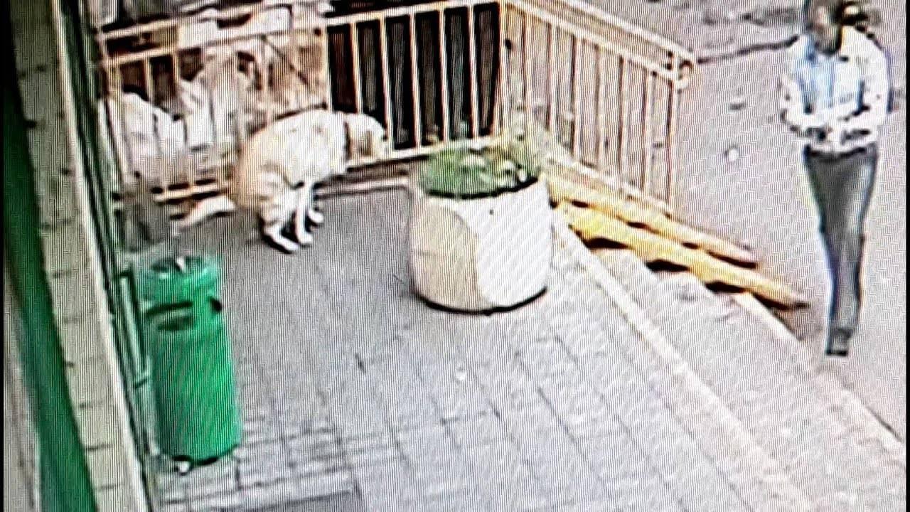 Непрошеные гости на участке: как отпугнуть котов