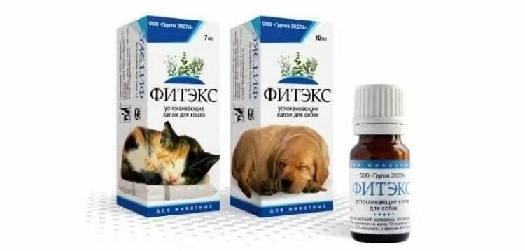 Успокоительные средства для кошек — как правильно выбрать?
