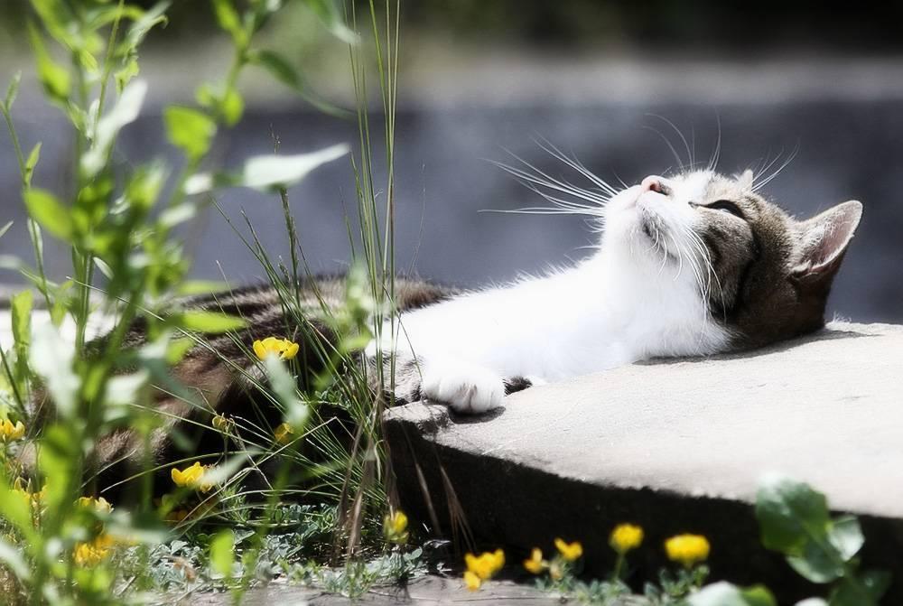 Авитаминоз (гиповитаминоз) у кошек