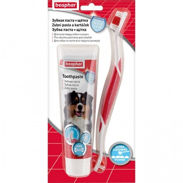 Как выбрать зубную пасту для кошек и почистить питомцу зубы?