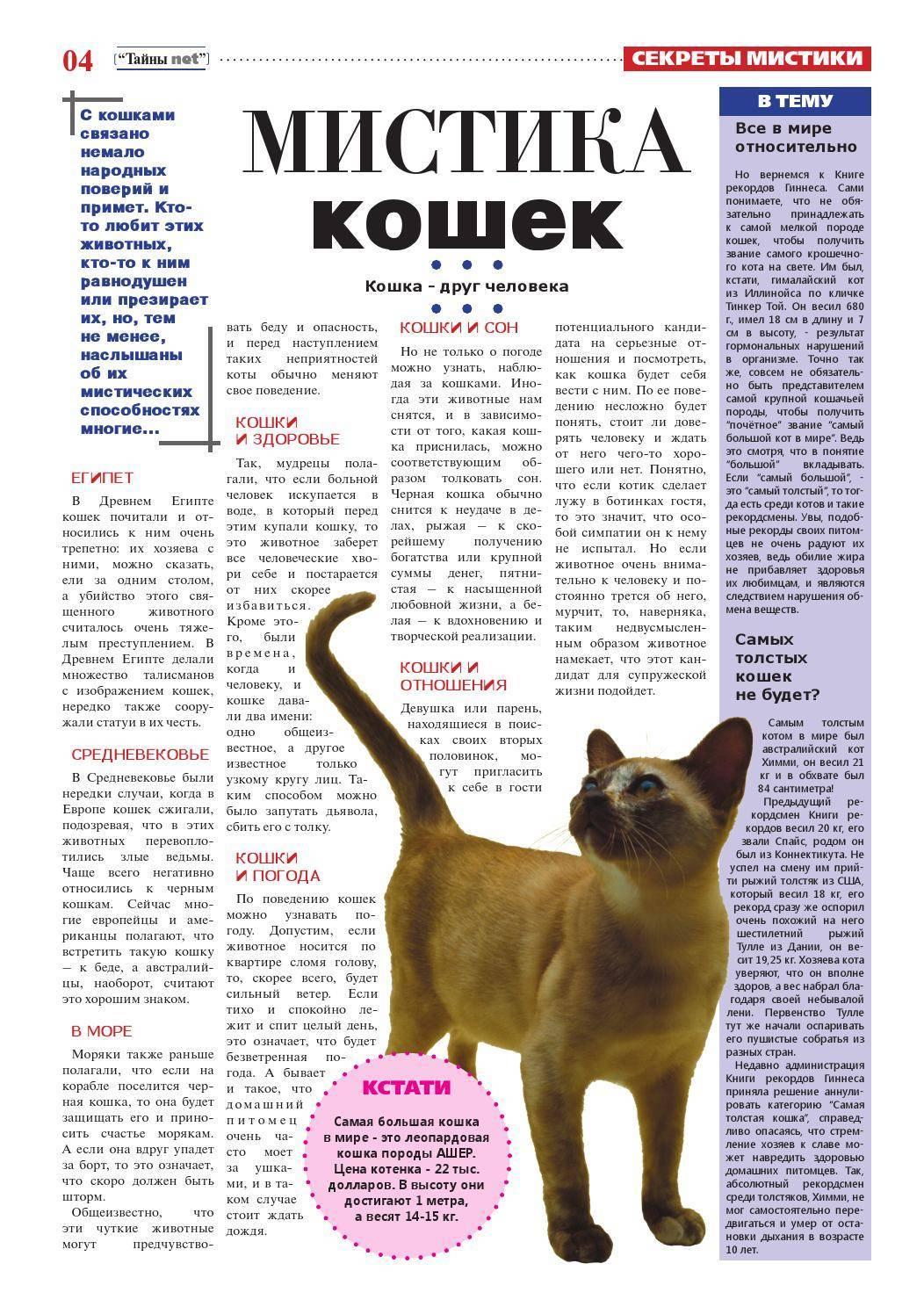 Вязка котов и кошек: всё, что нужно знать их владельцам - возраст для вязки, подготовка, правила и поведение кошек и котов до и после вязки - всё о кошках и котах