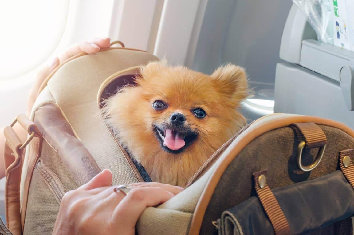 Правила перевозки собак в самолете в 2020 году