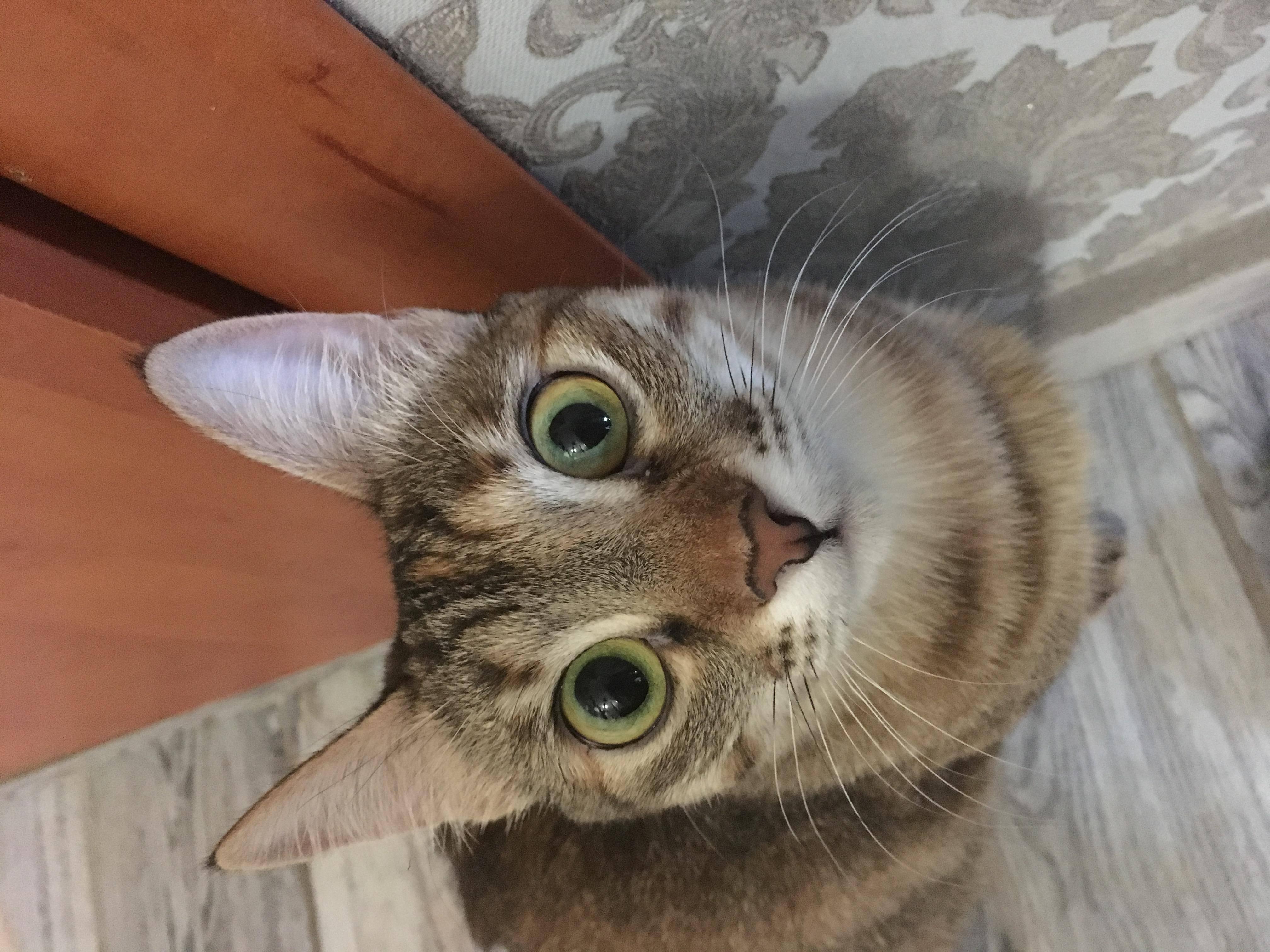 У кошки разные зрачки: причины, лечение, диагностика