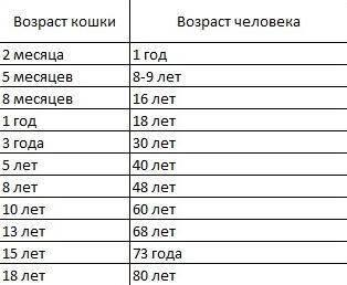 Как определить кошачий возраст по человеческим меркам с помощью таблицы