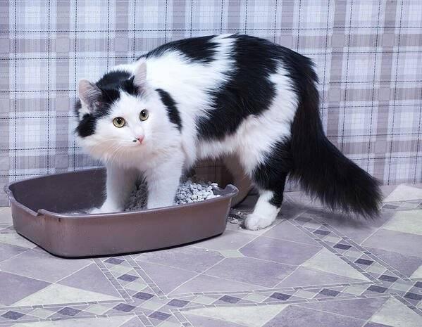 Почему появляется кровь в моче у кота и как это лечить