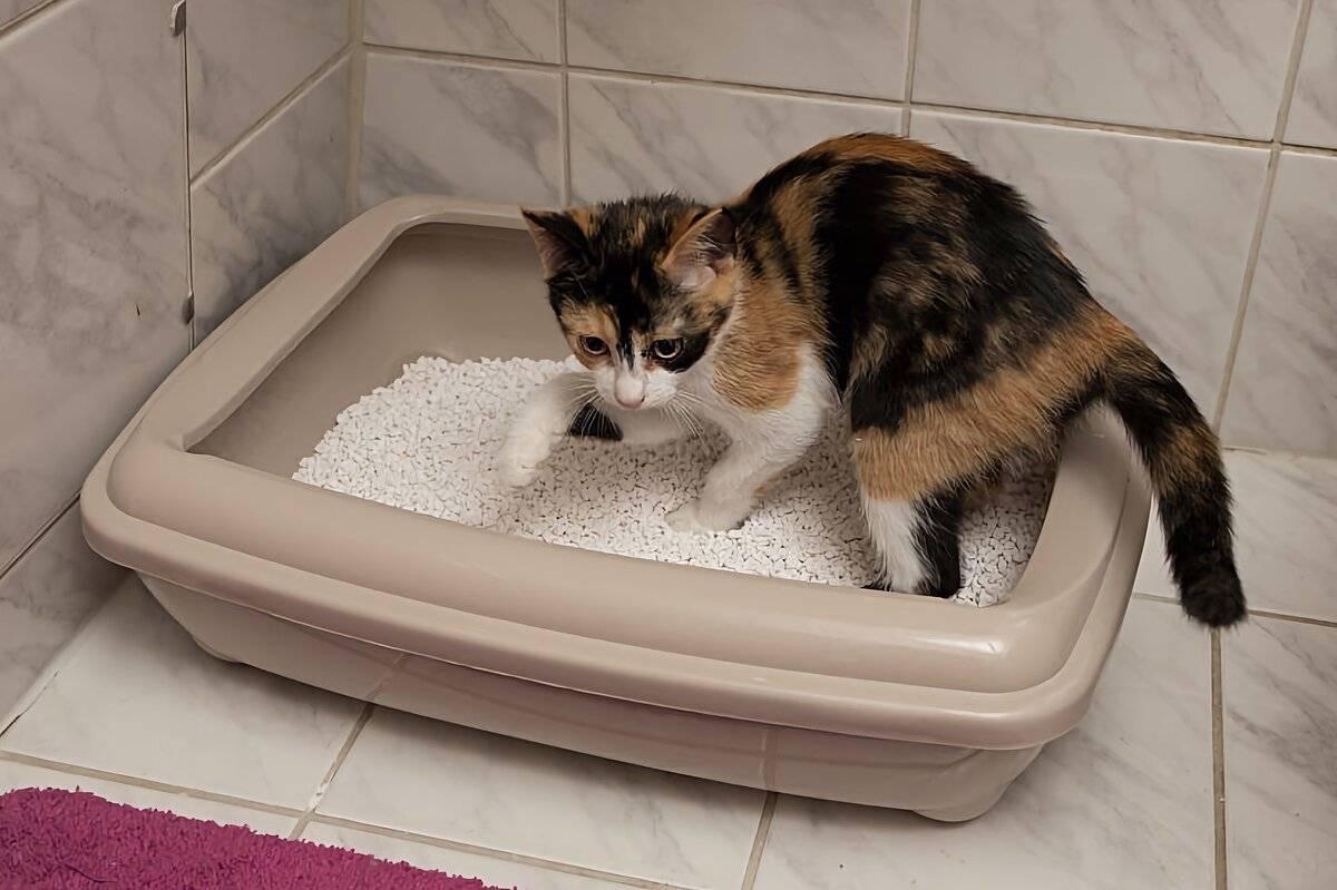 Что делать, если у кошки понос и рвота?