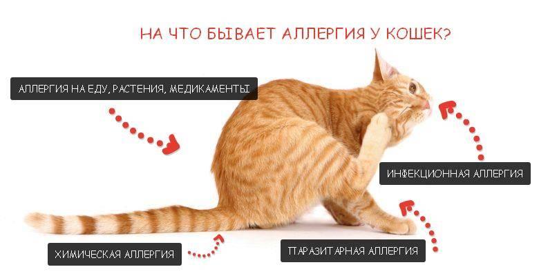 Какие антигистаминные препараты применяют для лечения кошек