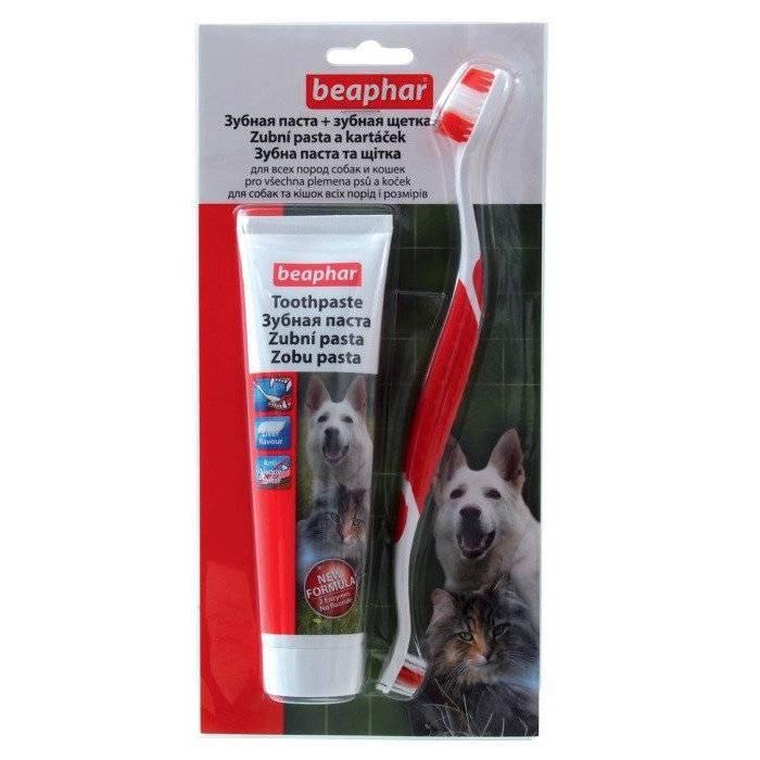 Как почистить зубы кошке в домашних условиях правильно