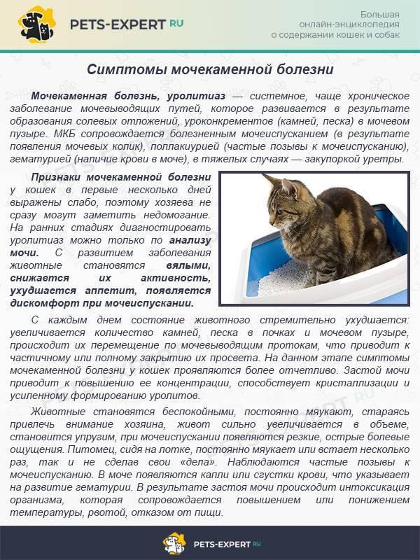 Мочекаменная болезнь (мкб) у котов и кошек не приговор