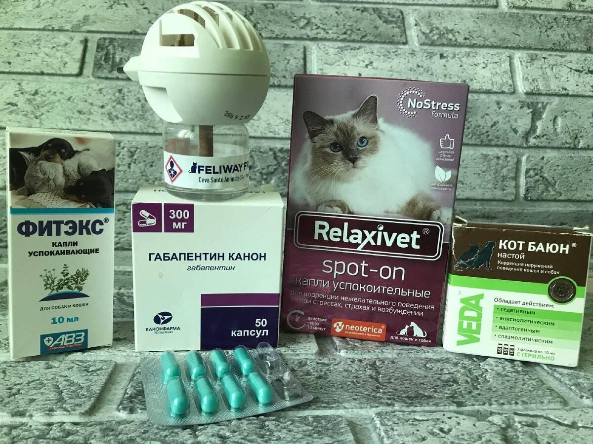 5 лучших успокоительных средств для кошек