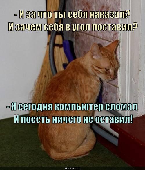 Как правильно наказывать кошку – наказание кошки