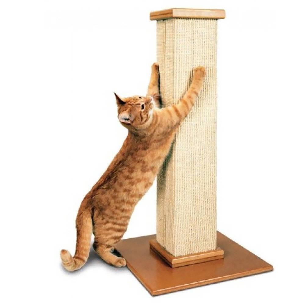Как приучить котенка к когтеточке – пошаговая инструкция эффективного обучения + советы по оптимальному выбору когтеточки