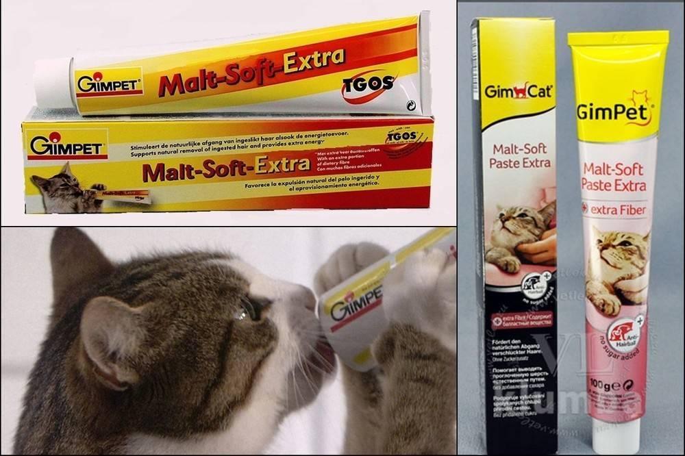 Шерсть в желудке у кошки лечение - муркин дом