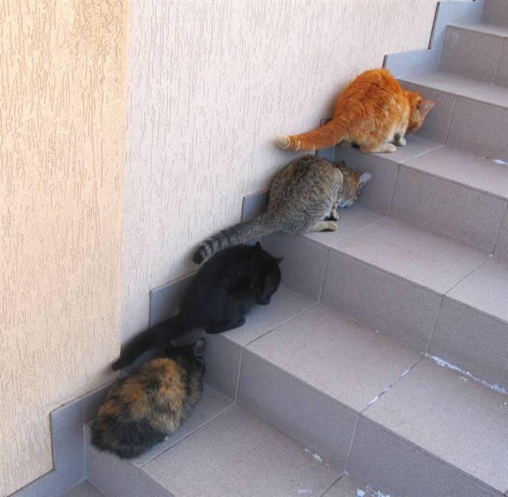 Кот уткнулся в стену. почему кошка смотрит в стену? факты и цифры