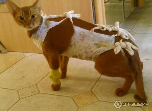 Попона для кошки — важный элемент гардероба для защиты домашнего любимца