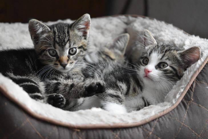 Уход за старой кошкой - болезни старых кошек, чем кормить старую кошку, питание старых кошек - всё о кошках и котах