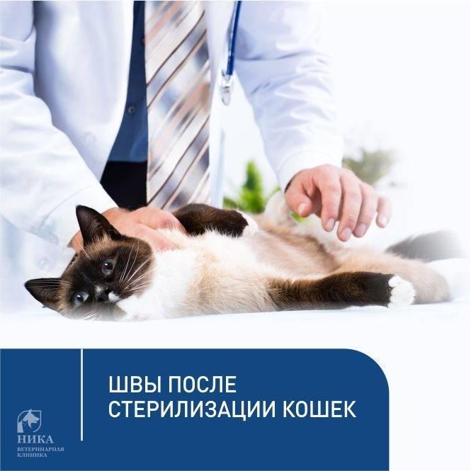 Когда можно и в каком возрасте лучше делать стерилизацию кошки
