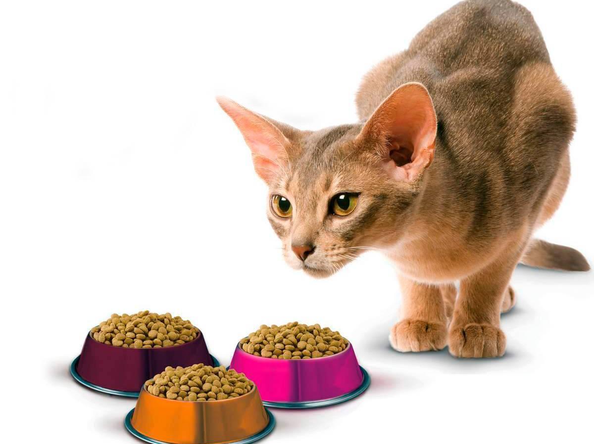 Почему кошка закапывает миску с едой, роет что-то возле миски лапой