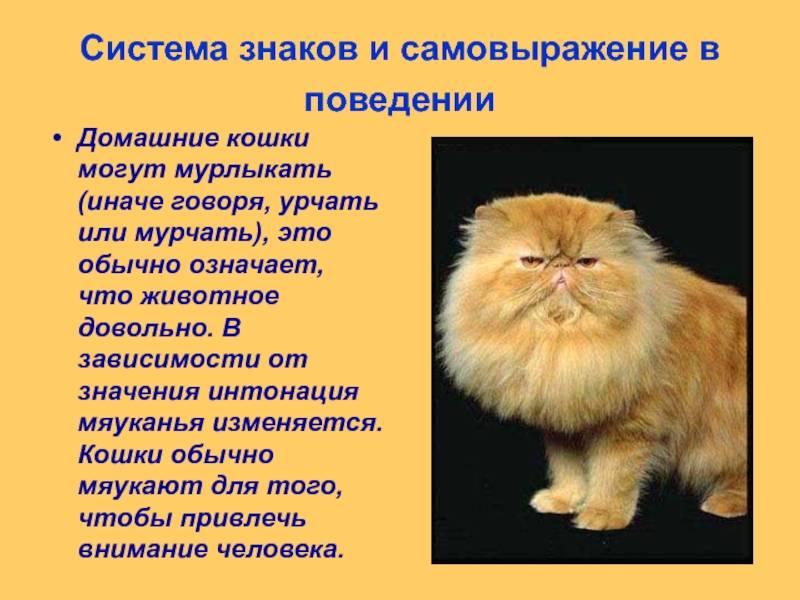 Повадки кошек – классический «набор»